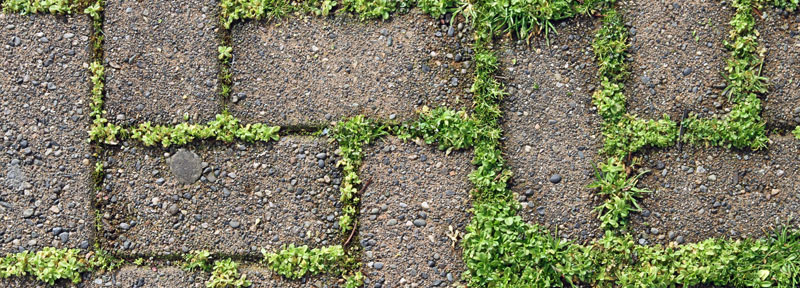 moss growing on a driveway